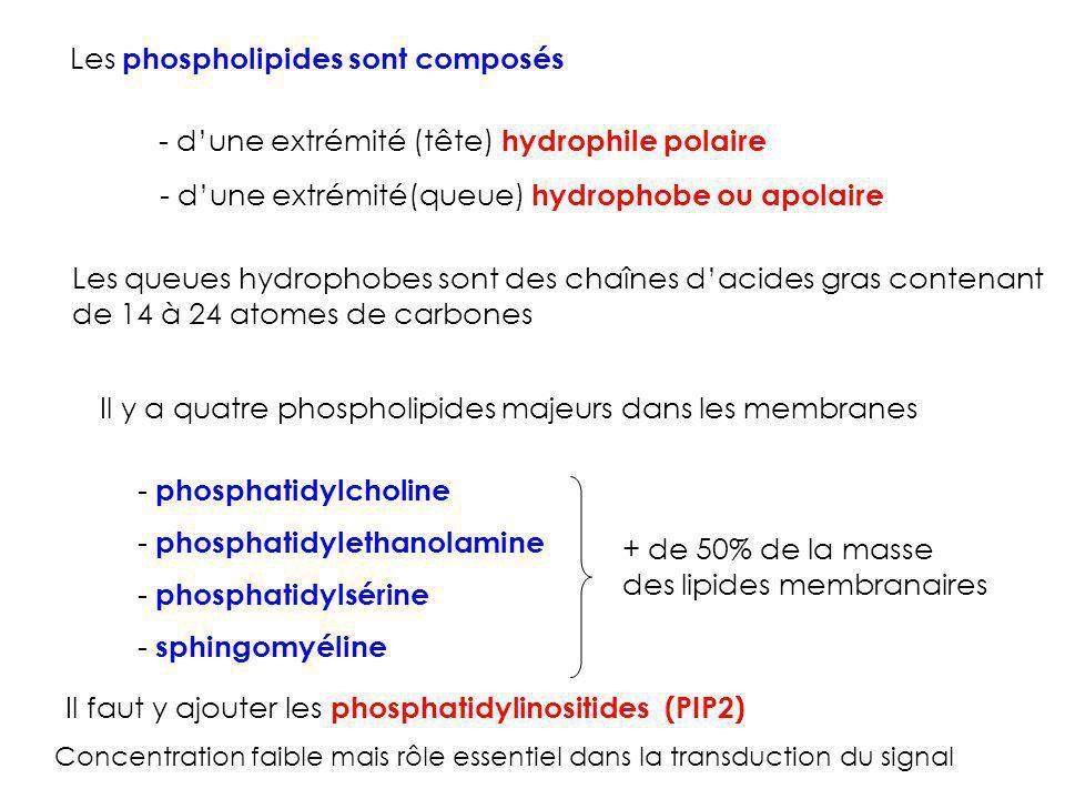 Les phospholipides sont composés