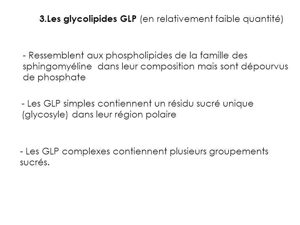 3.Les glycolipides GLP (en relativement faible quantité)
