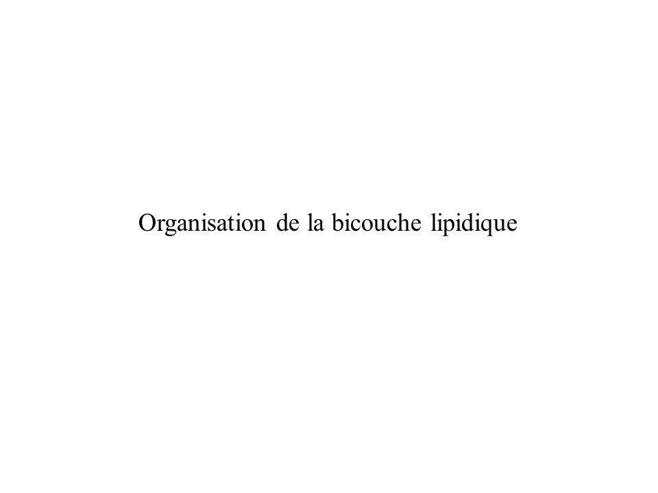Organisation de la bicouche lipidique