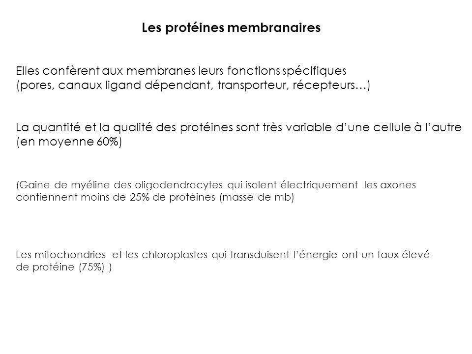 Les protéines membranaires