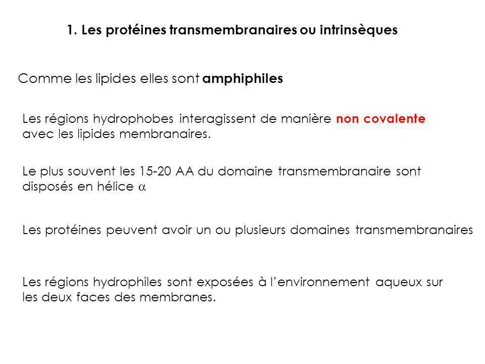 1. Les protéines transmembranaires ou intrinsèques