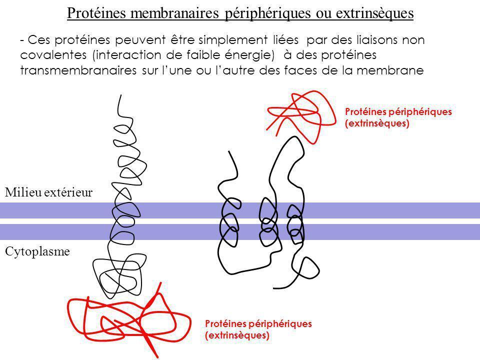 Protéines membranaires périphériques ou extrinsèques