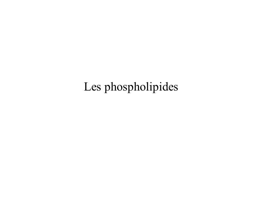 Les phospholipides