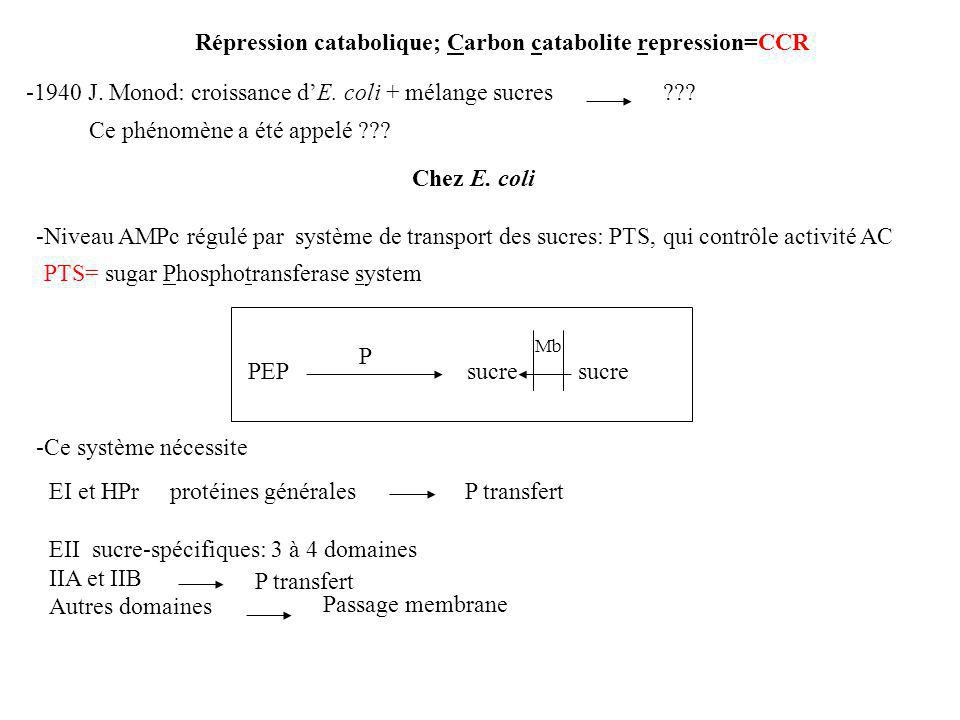 Répression catabolique; Carbon catabolite repression=CCR