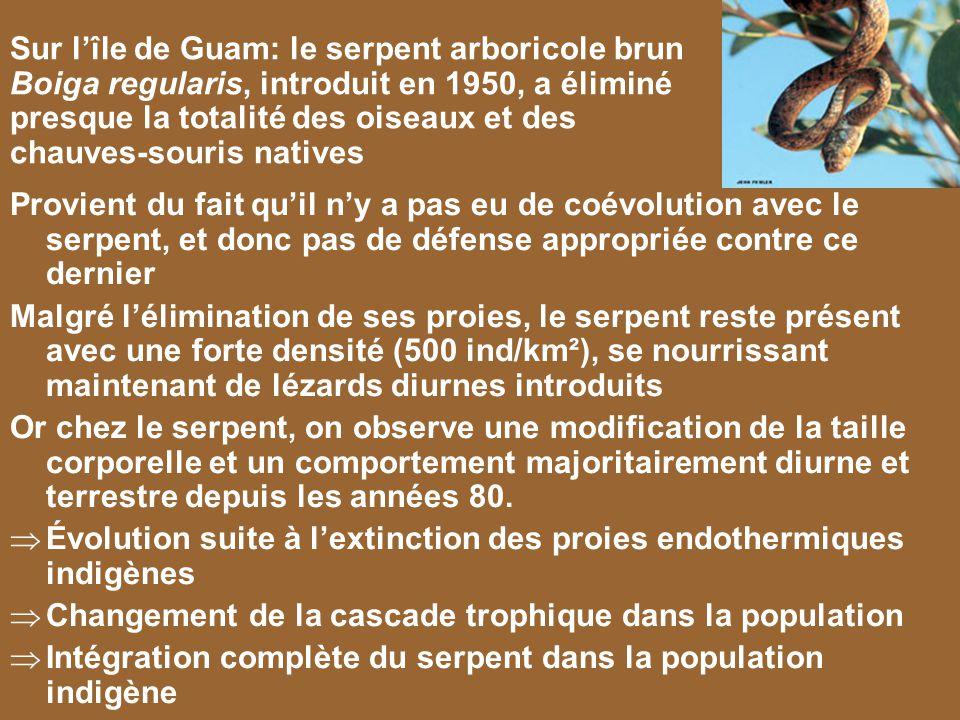 Évolution suite à l'extinction des proies endothermiques indigènes