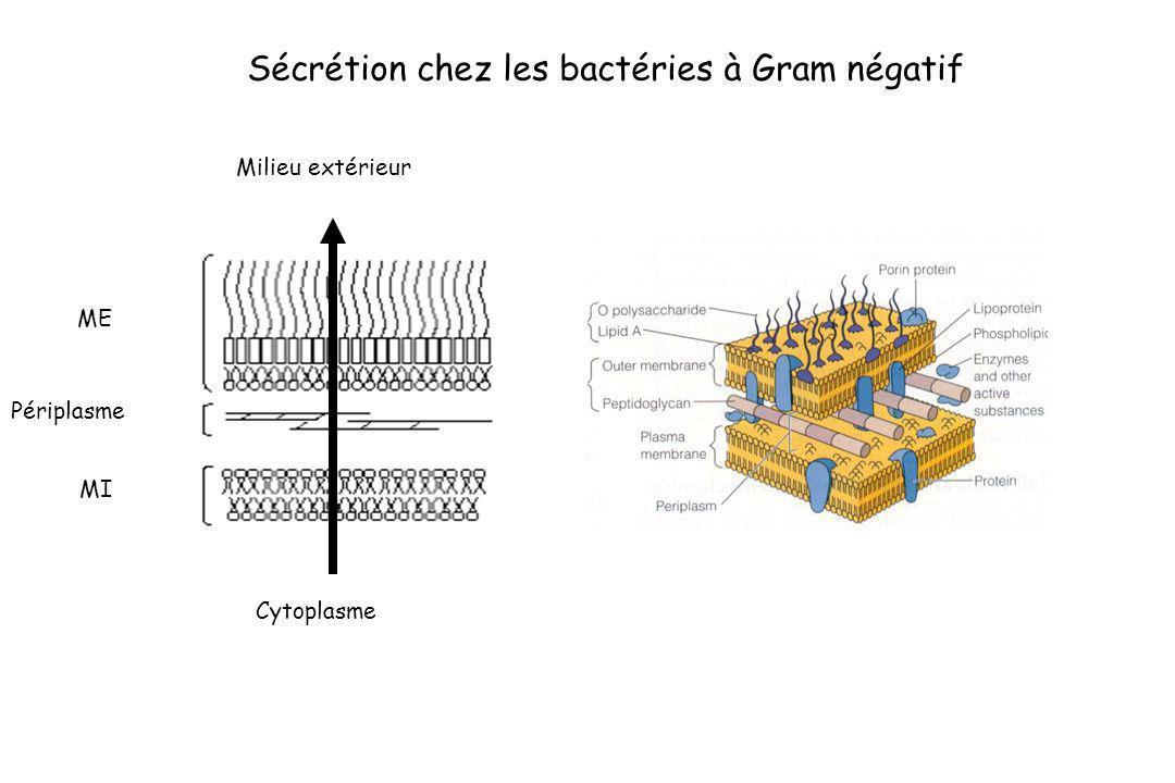 Sécrétion chez les bactéries à Gram négatif