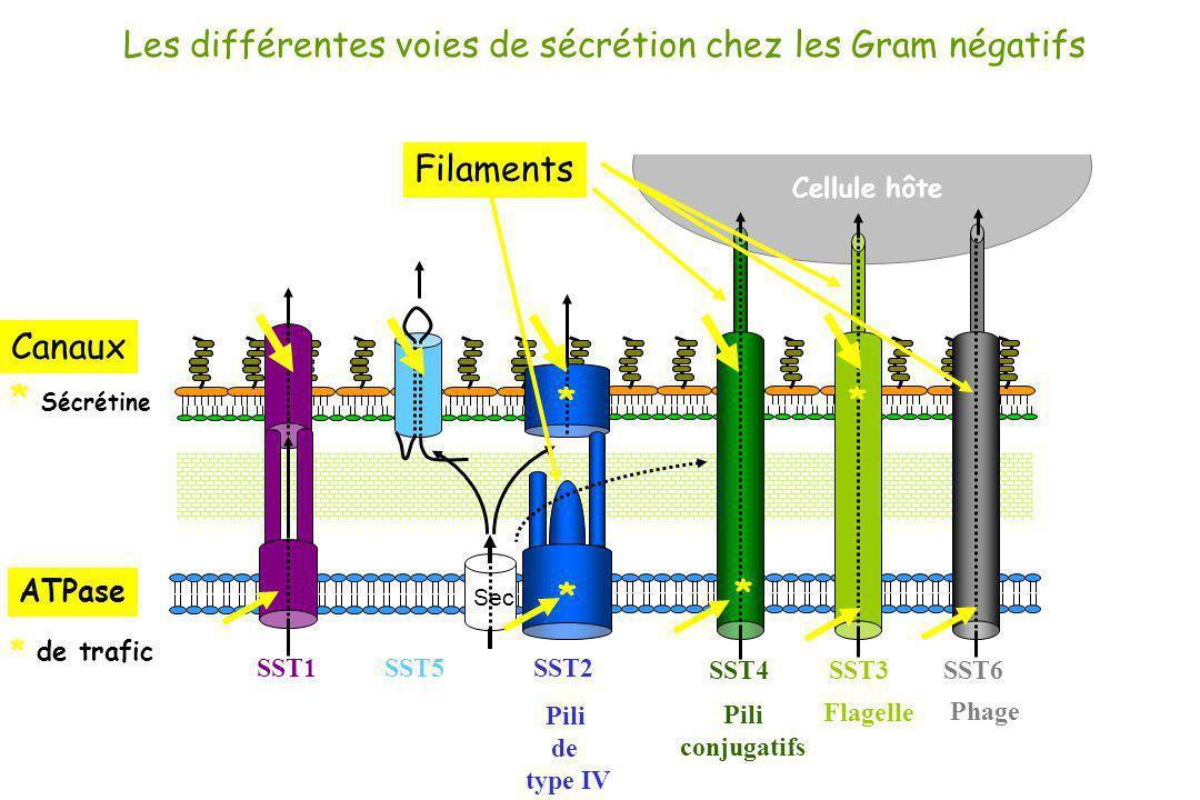 Les différentes voies de sécrétion chez les Gram négatifs