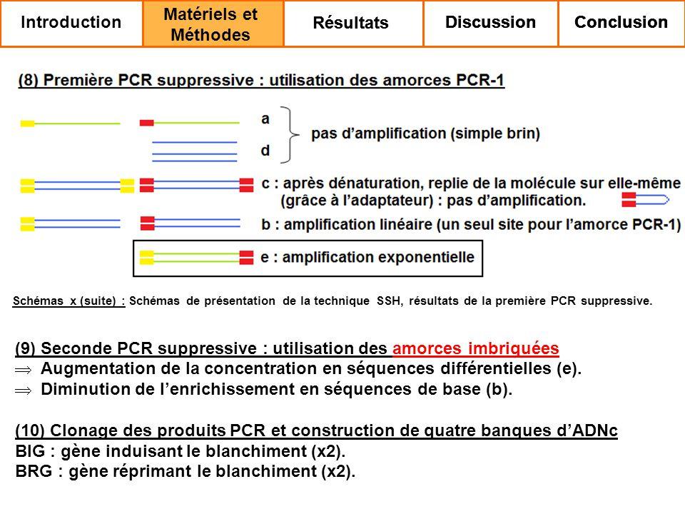 (9) Seconde PCR suppressive : utilisation des amorces imbriquées