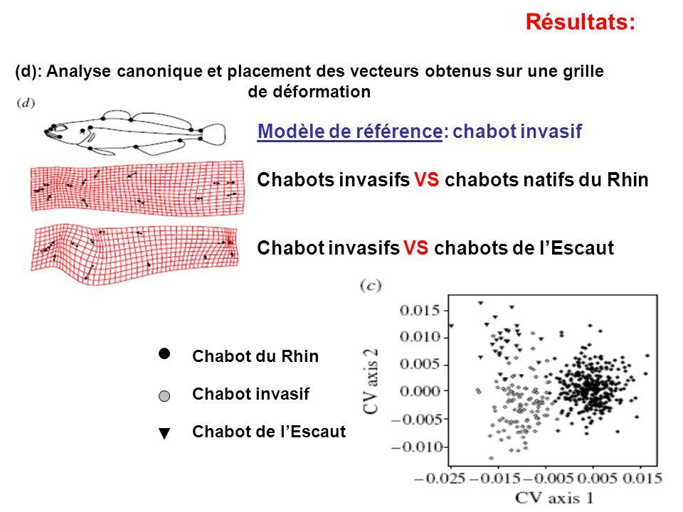 Modèle de référence: chabot invasif