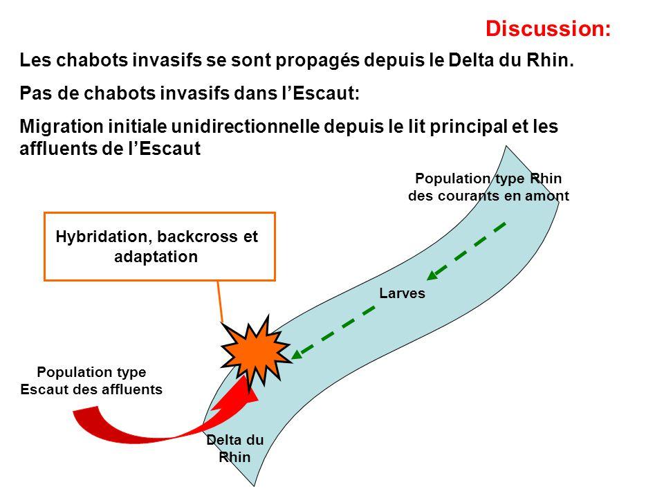 Discussion: Les chabots invasifs se sont propagés depuis le Delta du Rhin. Pas de chabots invasifs dans l'Escaut: