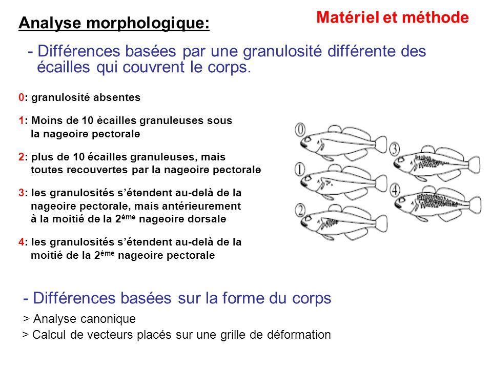 Analyse morphologique: