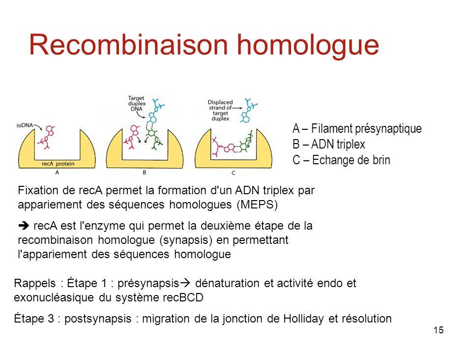 Recombinaison homologue