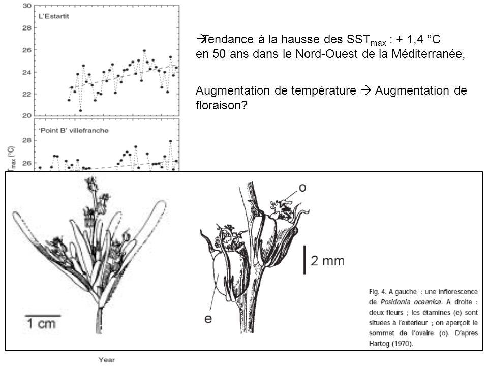 Tendance à la hausse des SSTmax : + 1,4 °C en 50 ans dans le Nord-Ouest de la Méditerranée,