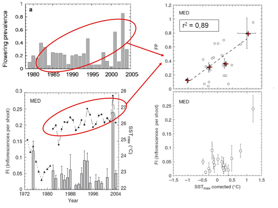 FI r2 = 0,89. FP.  Forte corrélation entre FP et FI en prenant en compte l'année 2003 (Diaz-Almela et al., 2006)