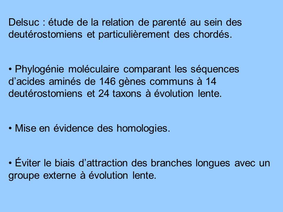 Delsuc : étude de la relation de parenté au sein des deutérostomiens et particulièrement des chordés.