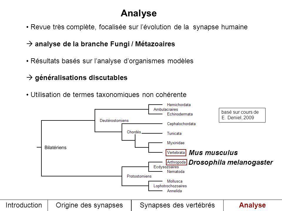 Synapses des vertébrés