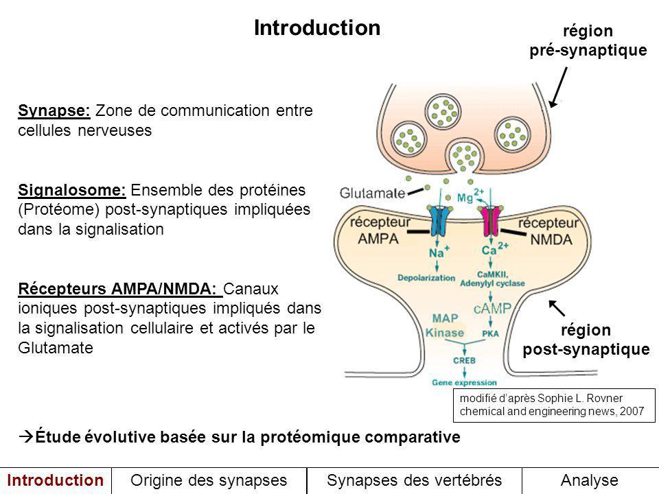 Étude évolutive basée sur la protéomique comparative