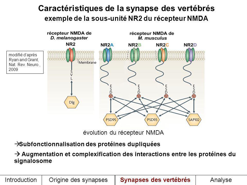 Caractéristiques de la synapse des vertébrés