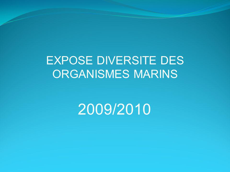 EXPOSE DIVERSITE DES ORGANISMES MARINS