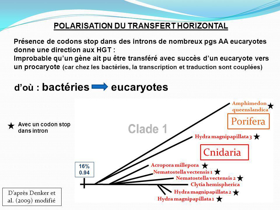 POLARISATION DU TRANSFERT HORIZONTAL