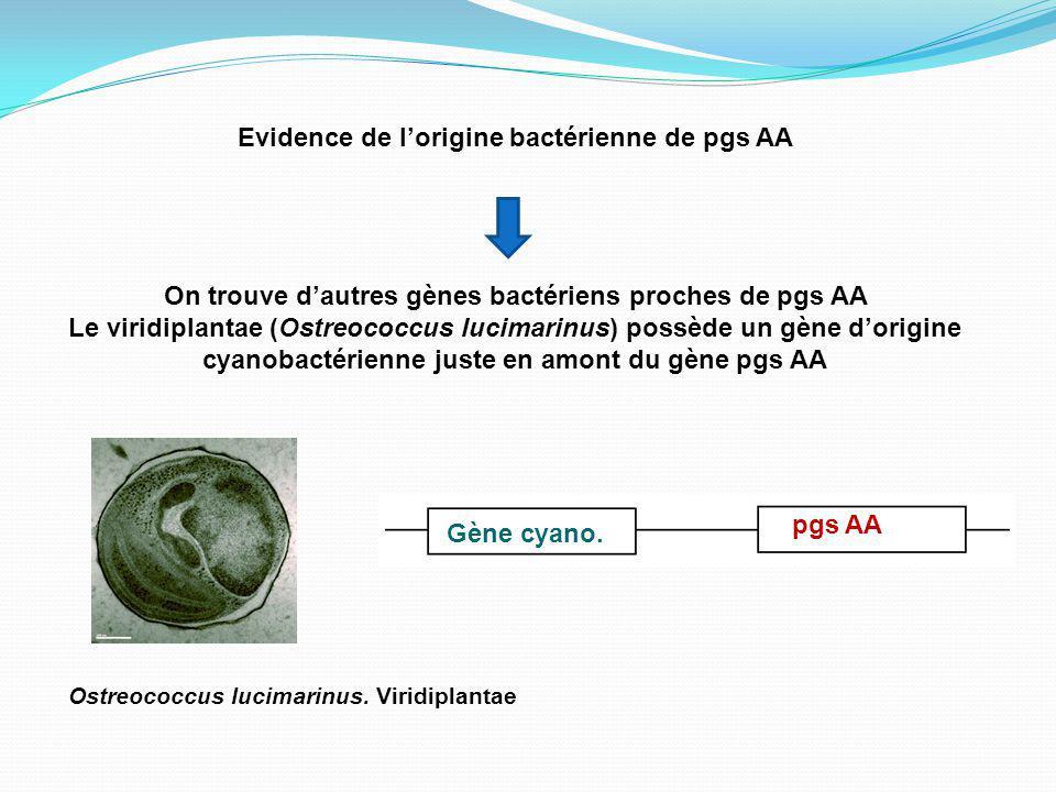 Evidence de l'origine bactérienne de pgs AA