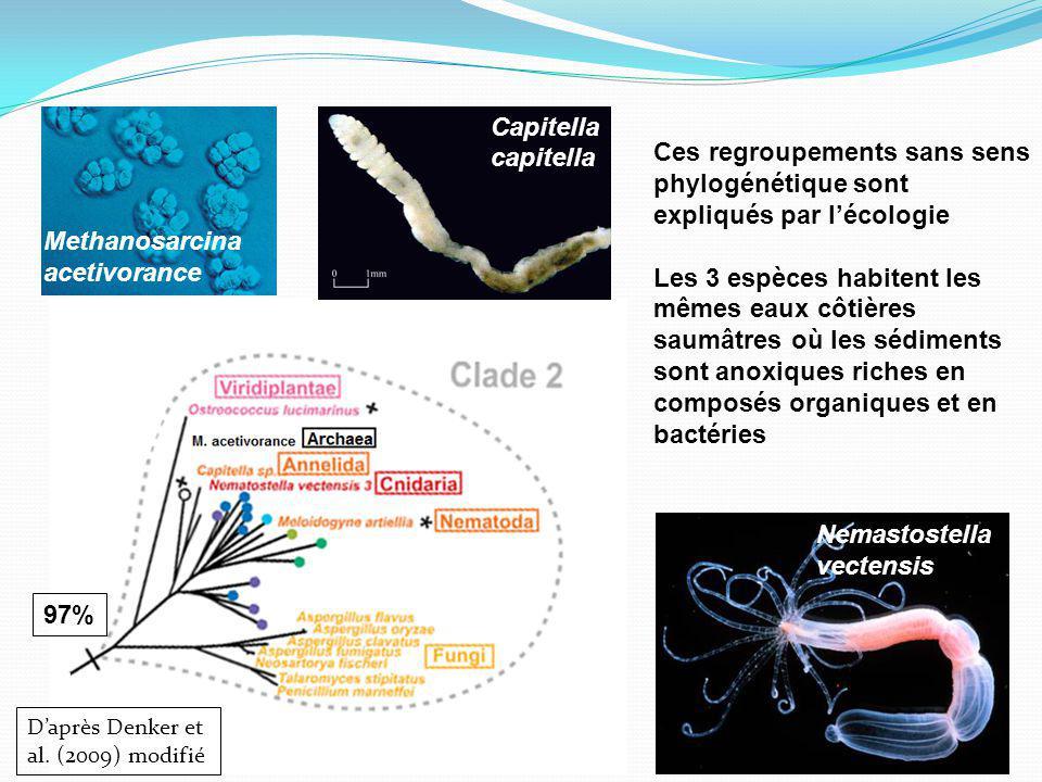 Methanosarcina acetivorance