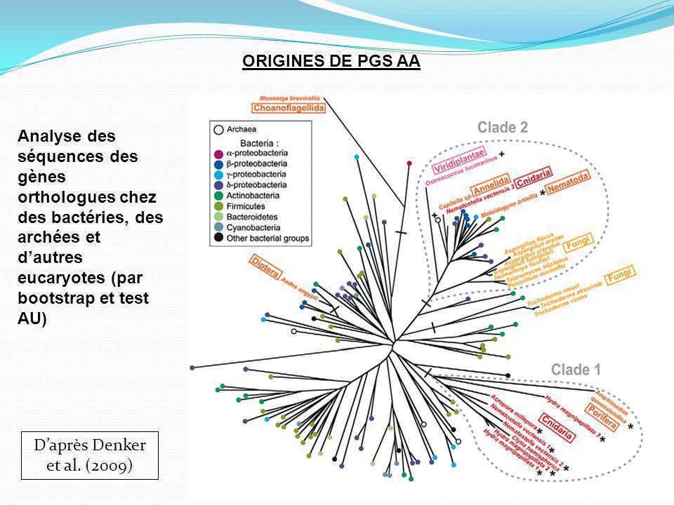 ORIGINES DE PGS AA Analyse des séquences des gènes orthologues chez des bactéries, des archées et d'autres eucaryotes (par bootstrap et test AU)