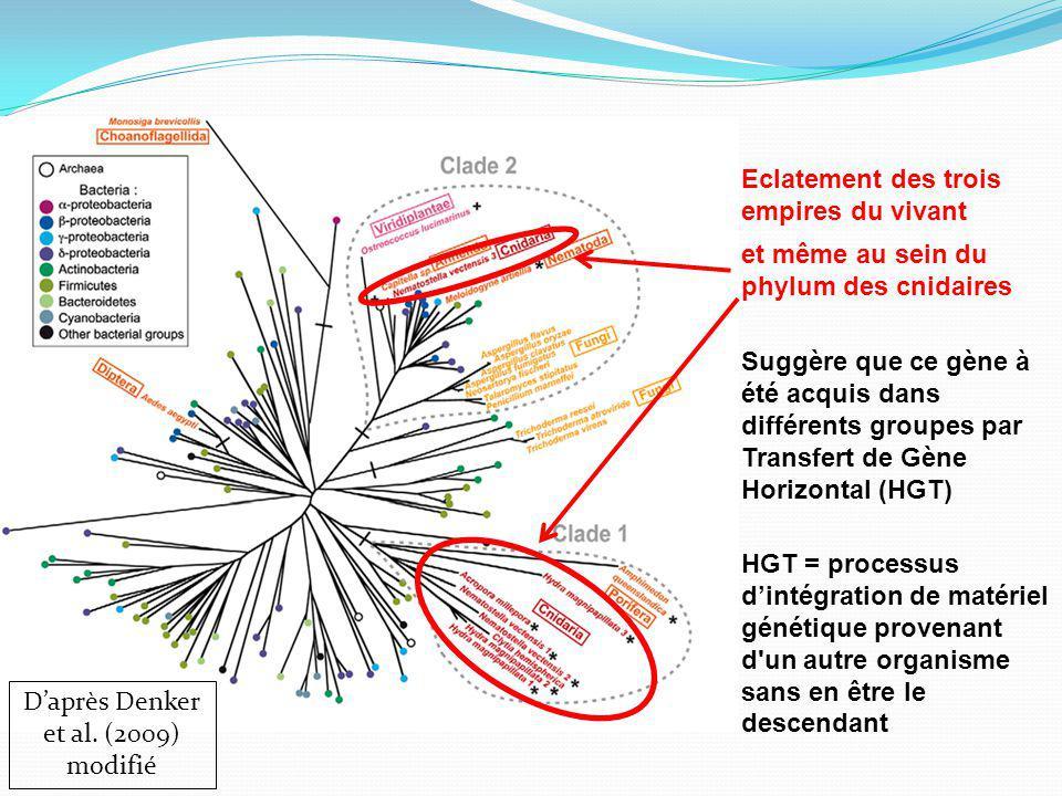 D'après Denker et al. (2009) modifié