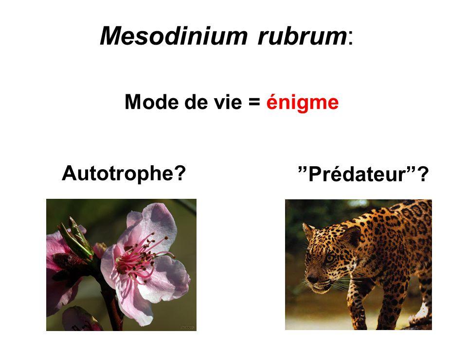 Mesodinium rubrum: Mode de vie = énigme Autotrophe Prédateur