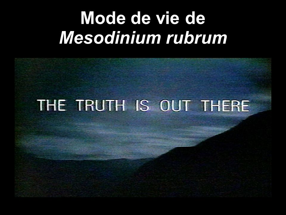 Mode de vie de Mesodinium rubrum
