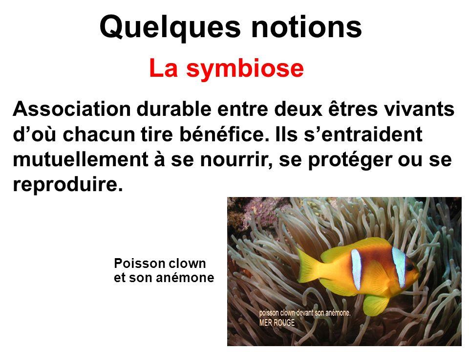 Quelques notions La symbiose