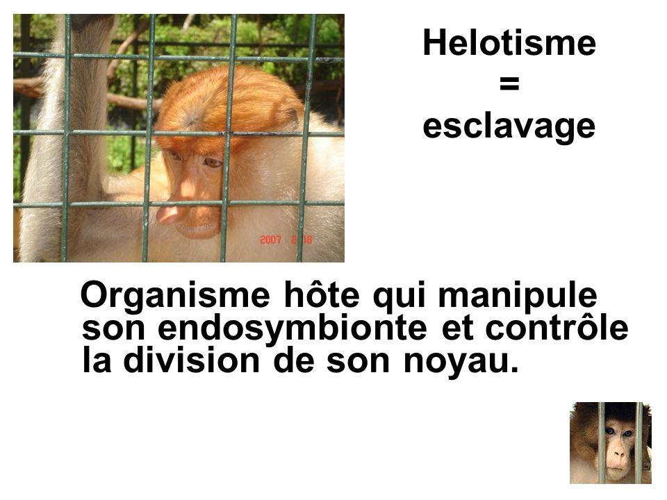 Helotisme = esclavage Organisme hôte qui manipule son endosymbionte et contrôle la division de son noyau.