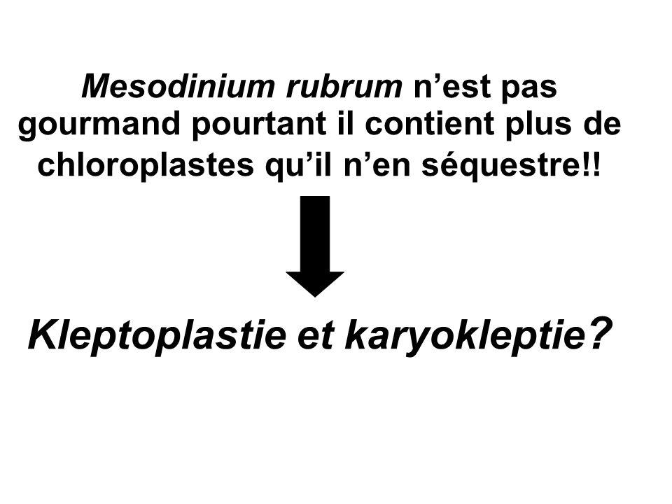 Mesodinium rubrum n'est pas gourmand pourtant il contient plus de chloroplastes qu'il n'en séquestre!.