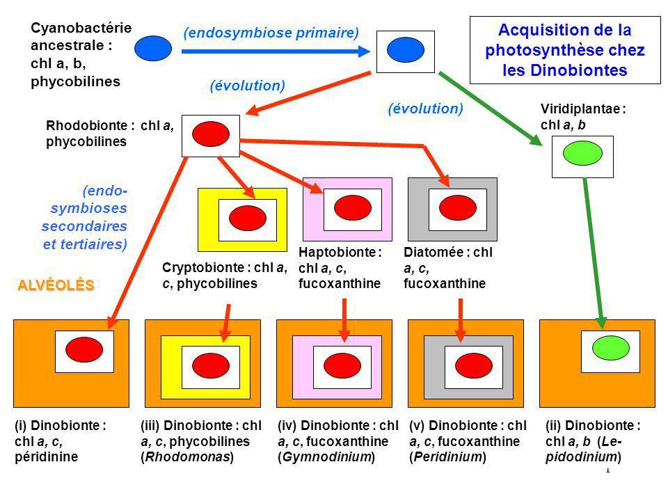 Acquisition de la photosynthèse chez les Dinobiontes