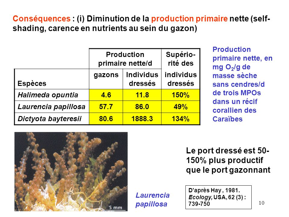 Production primaire nette/d