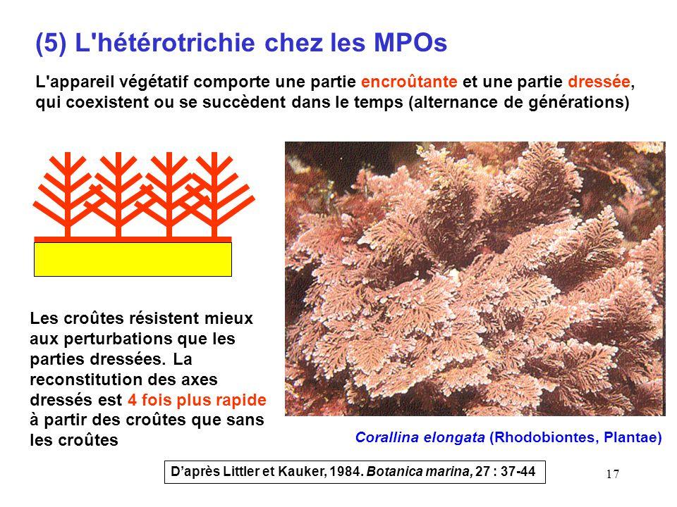 (5) L hétérotrichie chez les MPOs