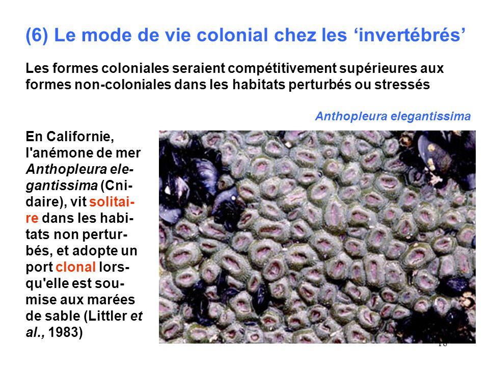 (6) Le mode de vie colonial chez les 'invertébrés'