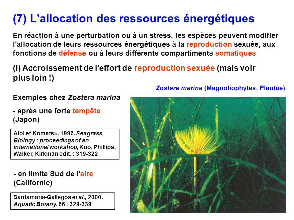 (7) L allocation des ressources énergétiques