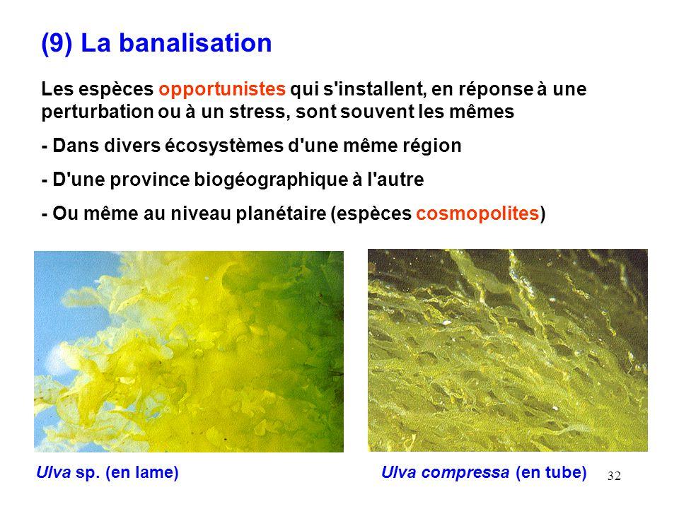 (9) La banalisation Les espèces opportunistes qui s installent, en réponse à une perturbation ou à un stress, sont souvent les mêmes.