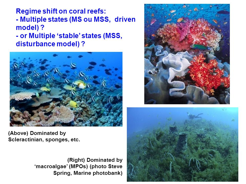 Regime shift on coral reefs: