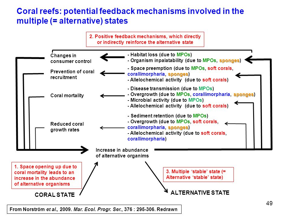 Coral reefs: potential feedback mechanisms involved in the multiple (= alternative) states