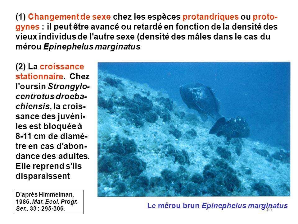 (1) Changement de sexe chez les espèces protandriques ou proto-gynes : il peut être avancé ou retardé en fonction de la densité des vieux individus de l autre sexe (densité des mâles dans le cas du mérou Epinephelus marginatus