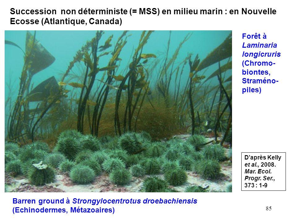 Succession non déterministe (= MSS) en milieu marin : en Nouvelle Ecosse (Atlantique, Canada)