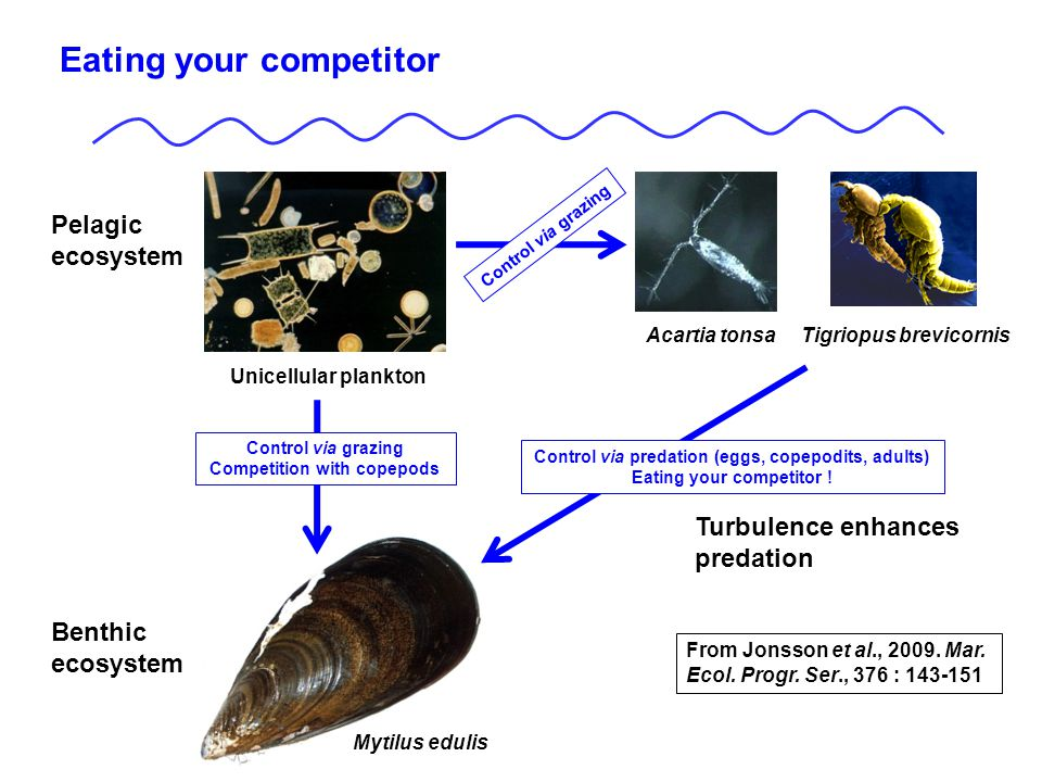 Control via grazing Competition with copepods