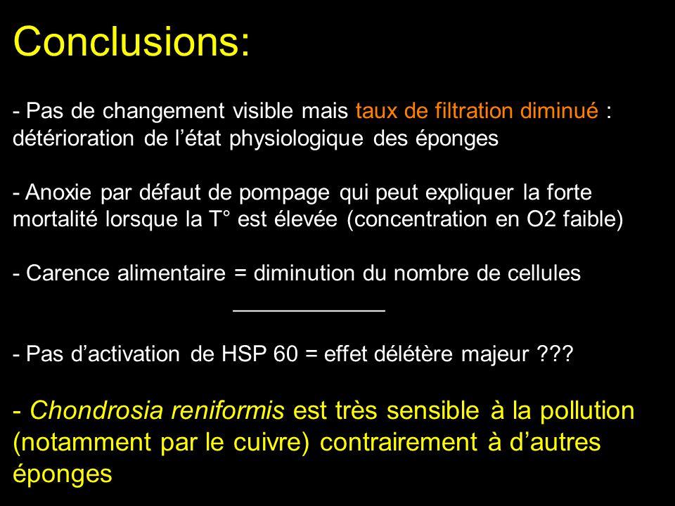 Conclusions: - Pas de changement visible mais taux de filtration diminué : détérioration de l'état physiologique des éponges - Anoxie par défaut de pompage qui peut expliquer la forte mortalité lorsque la T° est élevée (concentration en O2 faible) - Carence alimentaire = diminution du nombre de cellules ____________ - Pas d'activation de HSP 60 = effet délétère majeur .