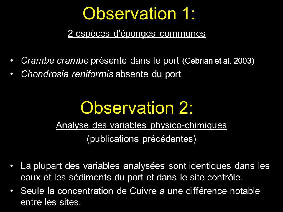 Observation 1: Observation 2: 2 espèces d'éponges communes