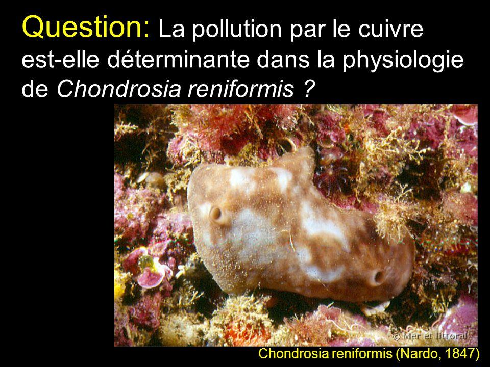 Question: La pollution par le cuivre est-elle déterminante dans la physiologie de Chondrosia reniformis