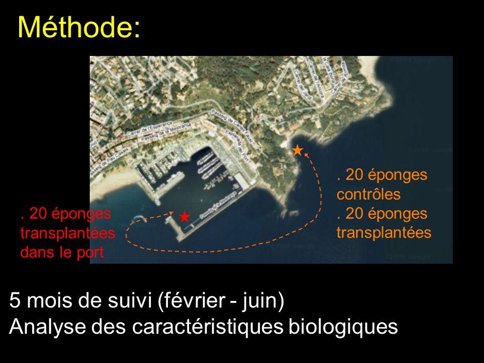 Méthode: . 20 éponges contrôles. . 20 éponges transplantées. . 20 éponges transplantées dans le port.