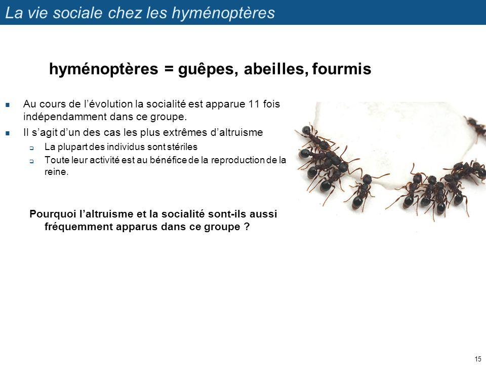 La vie sociale chez les hyménoptères