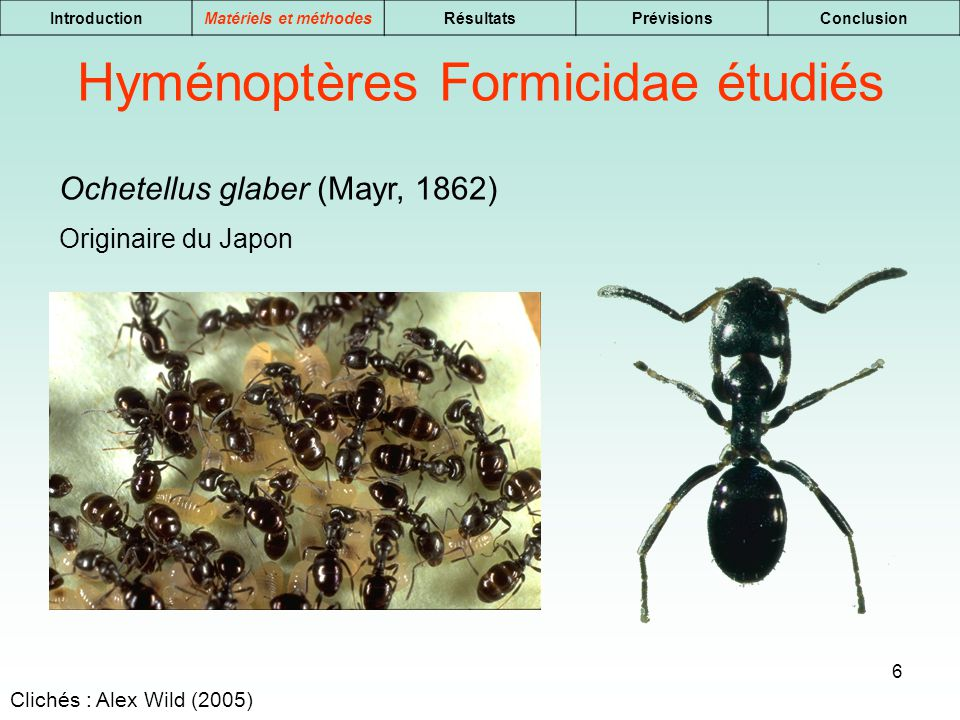 Hyménoptères Formicidae étudiés